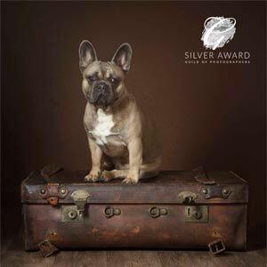 dog photographer awards