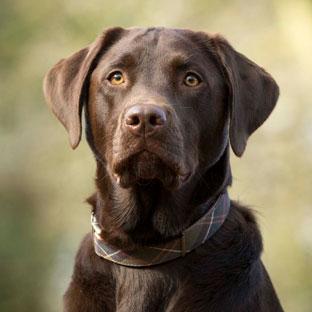 Dog Photographer Rebecca Goutorbe Derbyshire | Ashbourne | Staffordshire