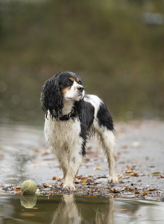 Dog Photographer news 2021