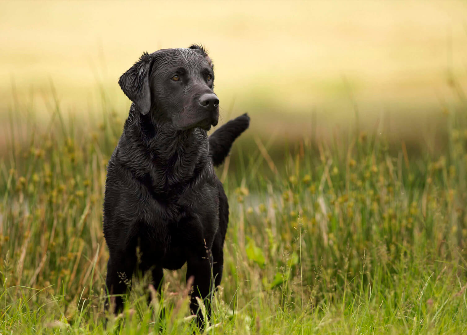how to become a dog photographer