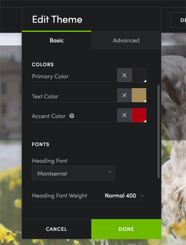 accent colour for photography website