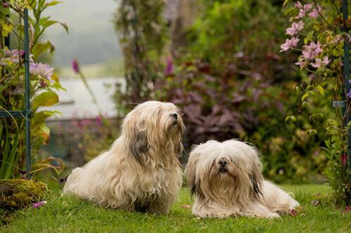 outdoor dog photographer