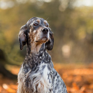dog portrait photography derbyshire